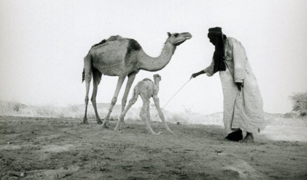 Middle. Photo i. Druckqualität (Camel)